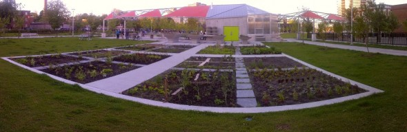Regent Park - The Big Park - Community Food Centre - Garden - June 23 2015